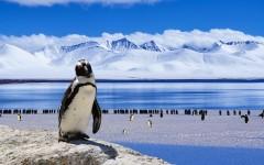 Antarktida je krutá i krásná zároveň
