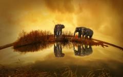 Slon v Thajsku nemá zrovna na růžích ustláno
